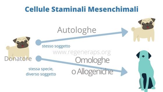 Cellule Staminali Mesenchimali autologhe e omologhe (1)