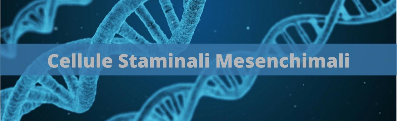 Cellule Staminali Mesenchimali pagina