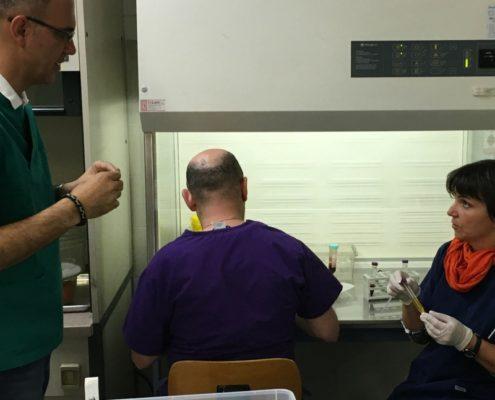 corso pratico regeneraps terapie rigenerative veterinarie