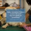 come riconoscere il dolore nel cane