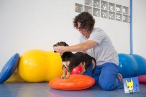 fisioterapia e artrosi nel cane 1