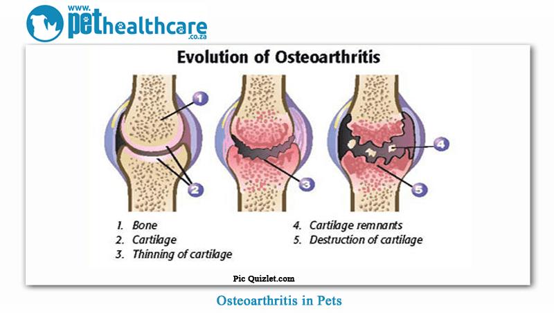 osteoartrosi e stress ossidativo cane (1)