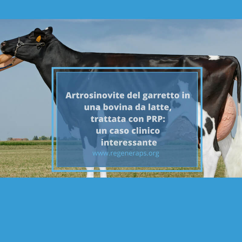 artrosinovite bovina da latte trattata con prp SOCIAL
