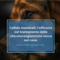 cheratocongiuntivite secca nel cane