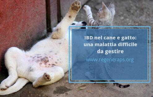 IBD cane e gatto