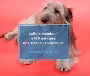 cellule staminali e ibd nel cane