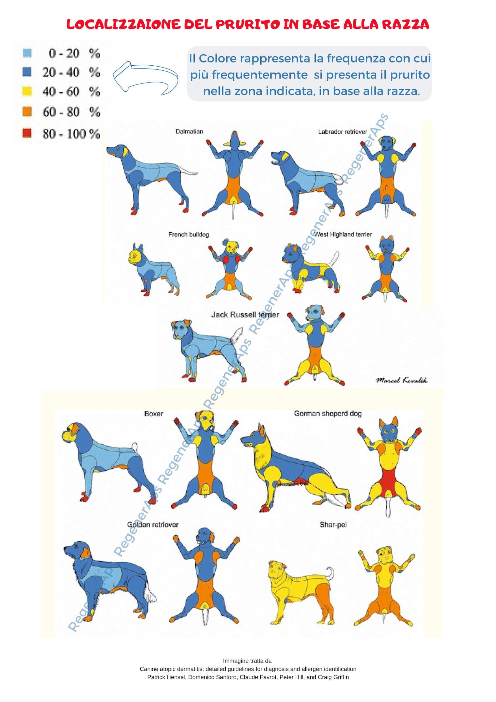 dermatite atopica nel cane prurito e localizzazione in base alla razza