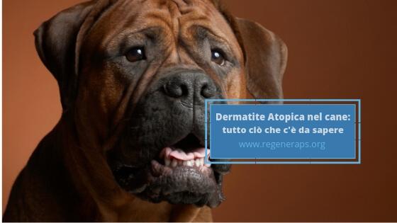 dermatite atopica nel cane