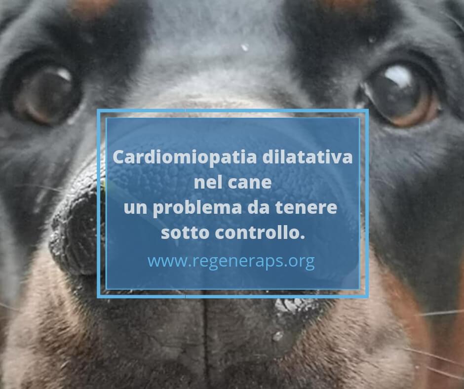 improvvisa perdita di peso nei cani boxeri
