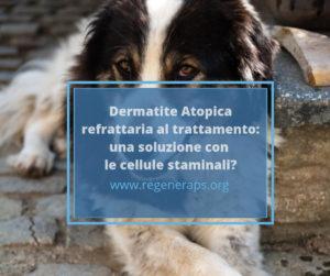staminali e dermatite atopica
