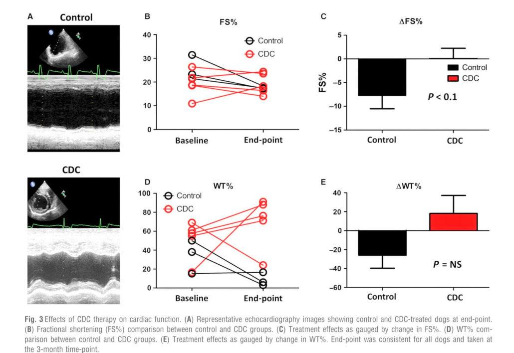 cellule staminali e miocardiopatia dilatativa del dobermann risultati