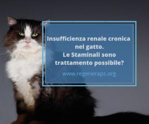 IRC gatto