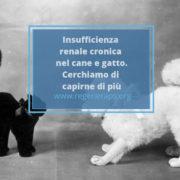 Insufficienza renale cronica cane e gatto