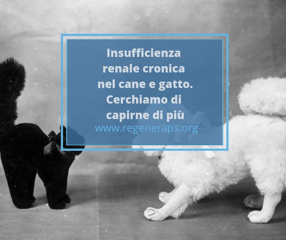 Insufficienza Renale Cronica Nel Cane E Gatto Regeneraps