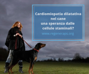 cardiomiopatia dilatativa del cane e cellule staminali
