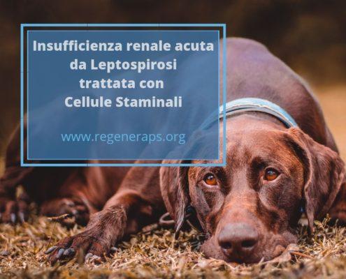 insufficienza renale acuta e cellule staminali